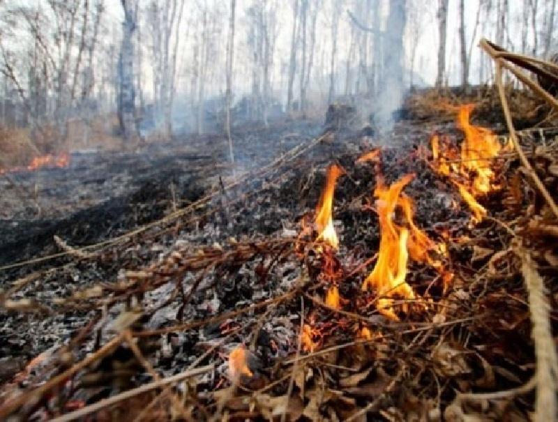 В Воронежской области отменен особый противопожарный режим
