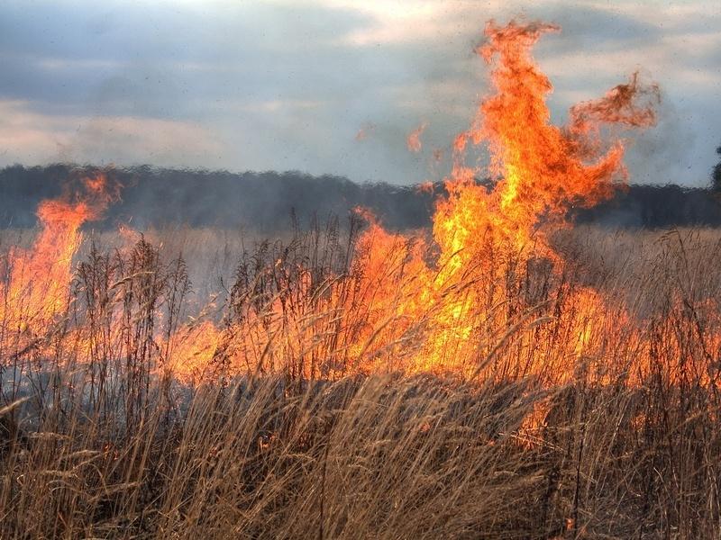 В Воронежской области загорелся полигон с боеприпасами