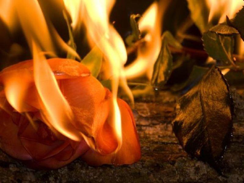 В аэропорту Воронежа сожгли 500 цветов из Армении