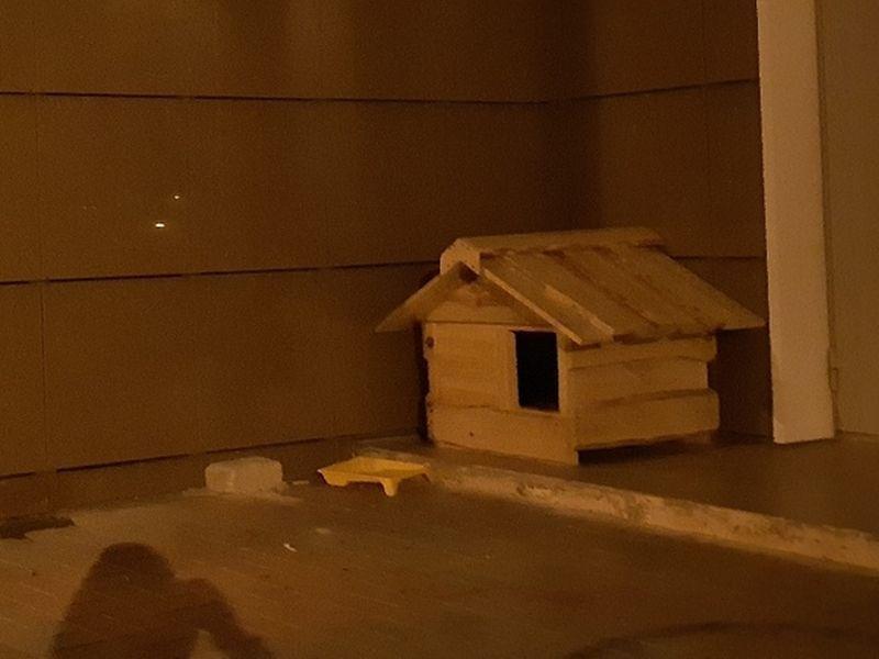 Модную конуру для бездомного пса построили у воронежской многоэтажки