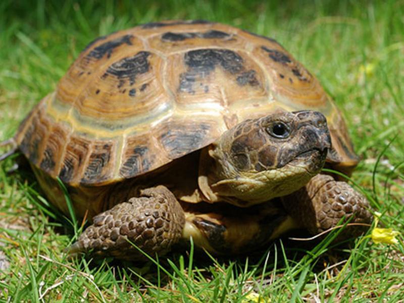 Среднеазиатская черепаха впервые снесла яйцо в Воронежском зоопарке