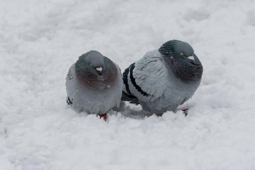 Воронежцам нанеделе вновь обещают сильные морозы