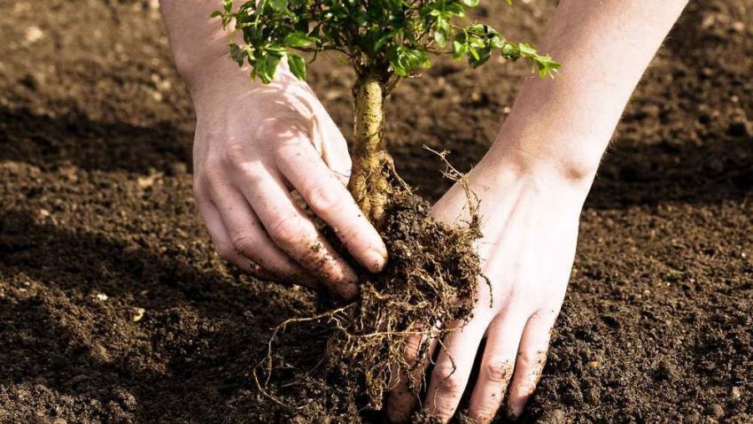 ВВоронеже высадят 2 тысячи деревьев и 10 000 кустарников
