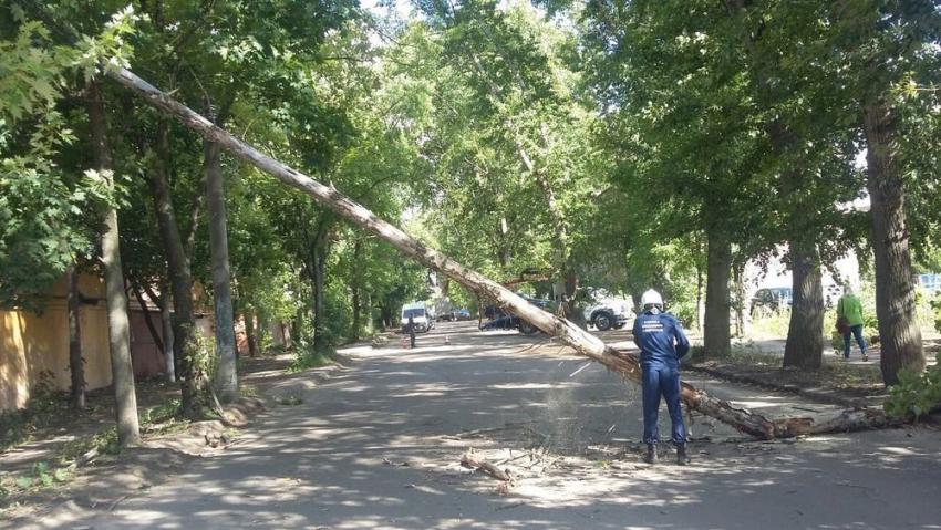 Повреждённые автомобили иэлектропровода. ВВоронеже порывистый ветер повалил 10 деревьев
