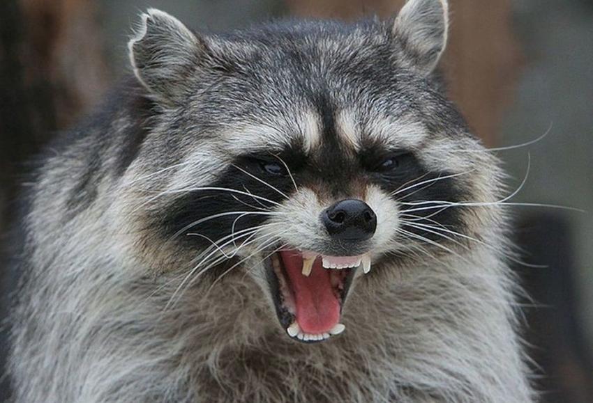 Ситуация сбешенством животных натерритории Воронежской области вызывает опасение