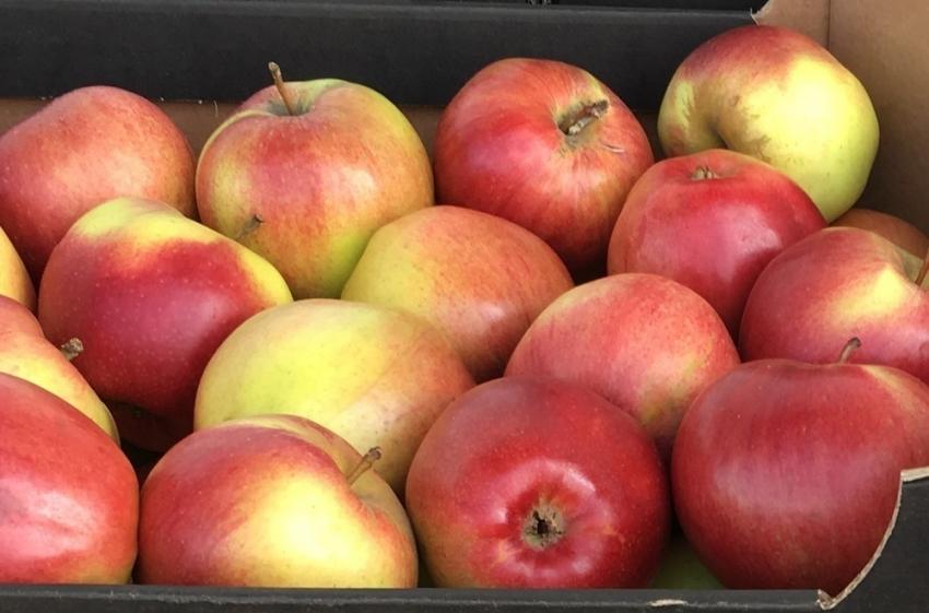 ВОрске уничтожили свыше 8 тонн польских яблок