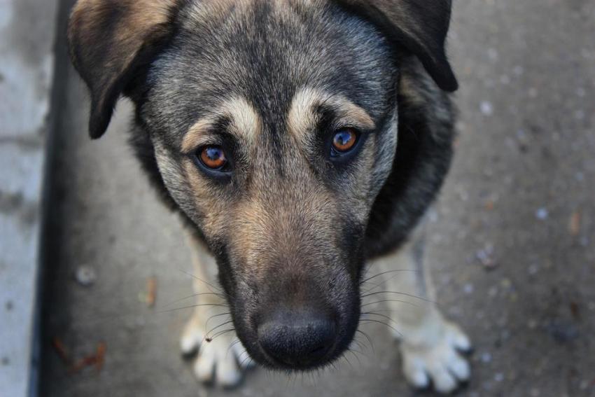 Власти призвали воронежцев сообщать об рискованных бездомных собаках