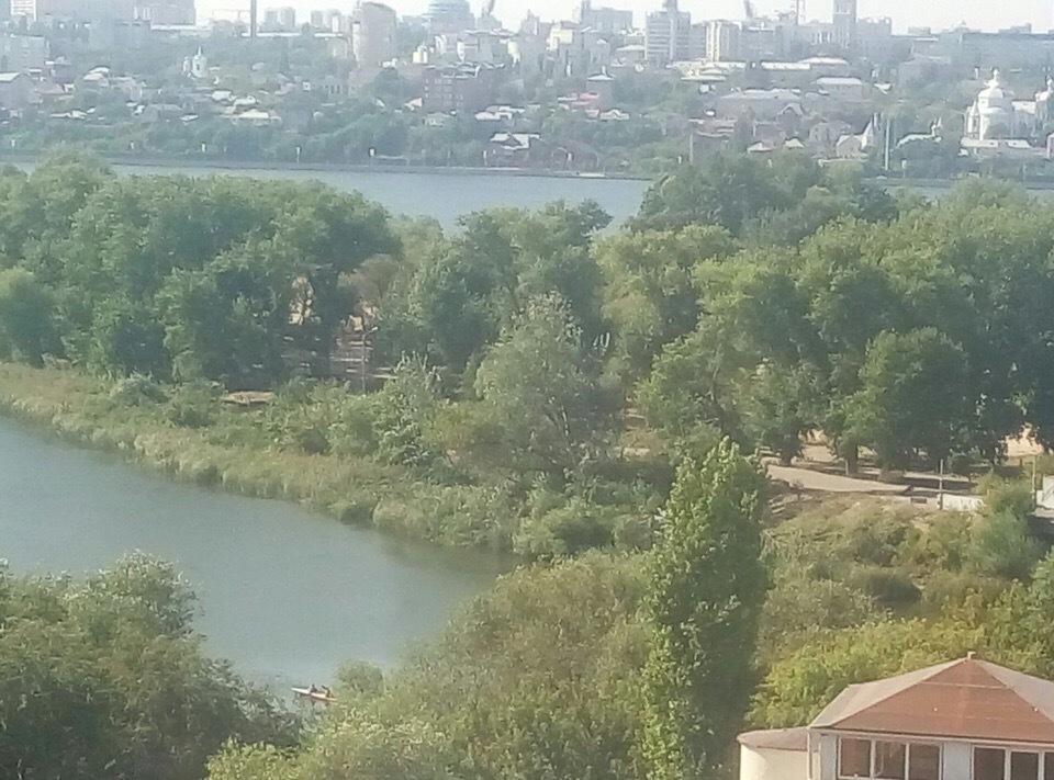 Воронежцы сообщили об уничтожении многолетних деревьев на Придаченской дамбе