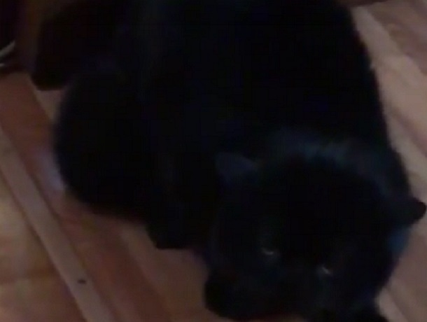 Одержимого демонами кота сняли на видео в Воронеже