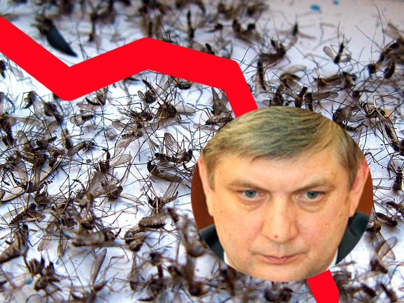 Воронежское правительство ответило за падение рейтинга Гусева, высосанного комарами