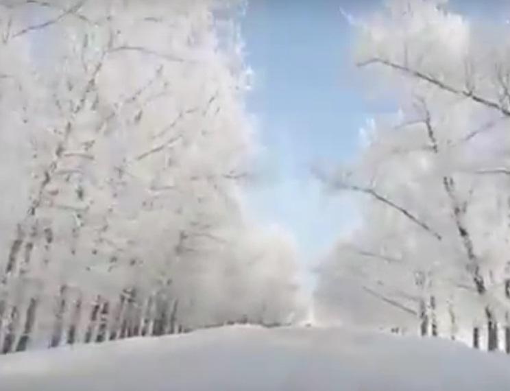 Самую живописную в Воронежской области трассу сняли на видео