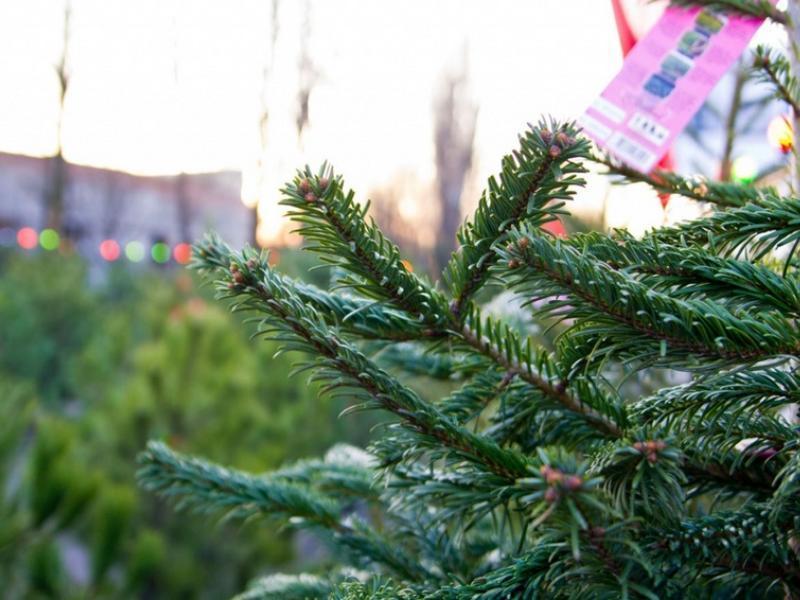Где купить елку в Воронеже рассказала мэрия