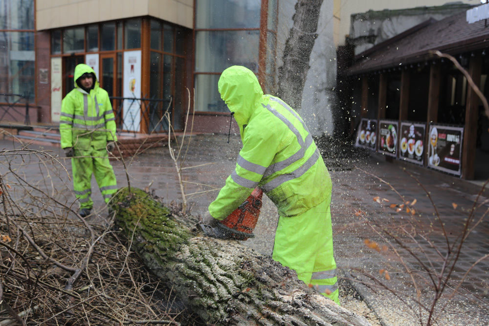 Всквере Дома офицеров вВоронеже вырубают пылящие тополи