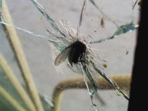 Суровую муху-Халка показали на фото в Воронеже