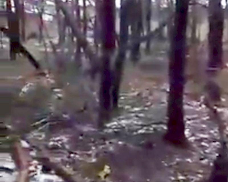 Воронежец снял на видео шокирующий лес на Машмете