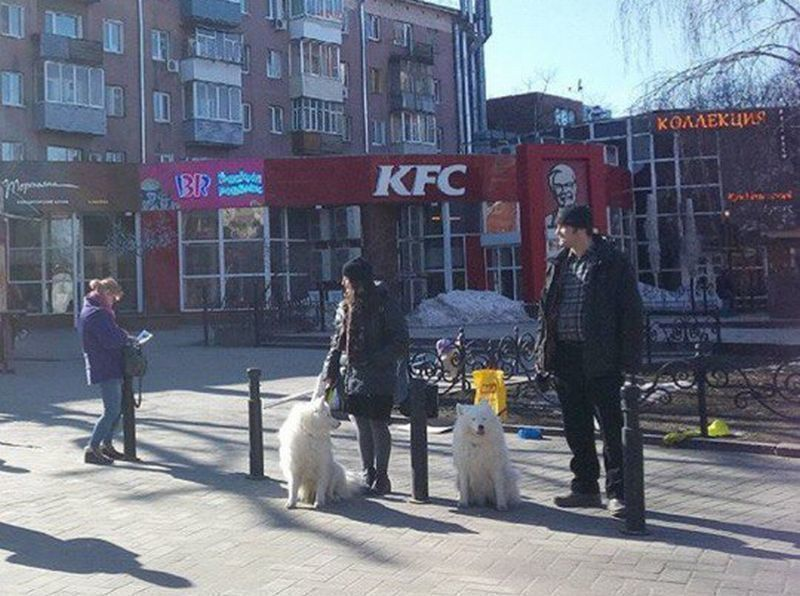 В центре Воронежа волонтеры собирают средства на помощь приюту «Дора»