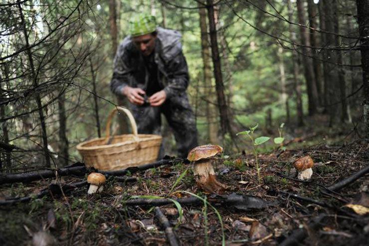 Жителей Воронежа оштрафовали за сбор ягод и грибов в лесах