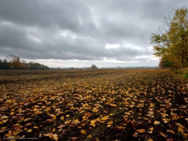 Тело 81-летней воронежской пенсионерки нашли в поле