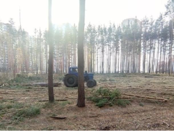 Воронежцы просят Путина сохранить лес в Боровом