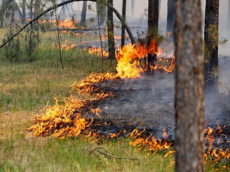 В Воронежской области увеличился класс пожарной опасности