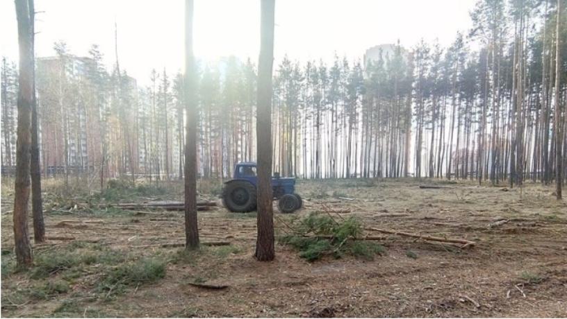 В мэрии Воронежа рассказали о судьбе вырубающегося леса в Боровом