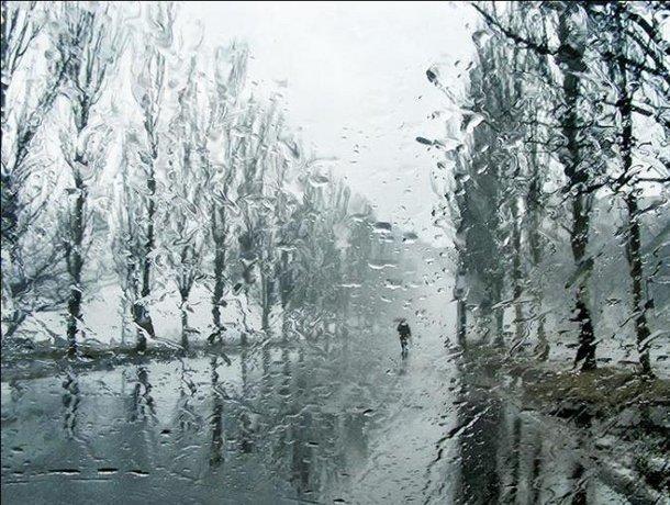 Плюсовую температуру с дождями обещают воронежцам синоптики