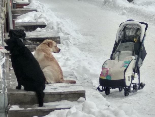 Жителей Воронежа поразила верность собак