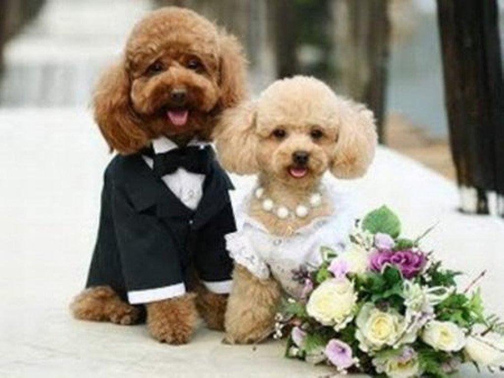 Поздравление свидетеля на свадьбе своими словами